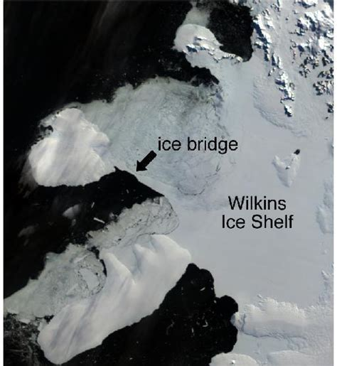Wilkins Shelf by Both Poles Are Melting Faster And Faster Sustainable