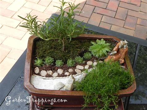 mini japanese garden rosemary bonsai diy miniature zen garden and rosemary