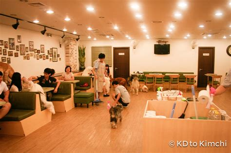 dog house cafe checking out bau house a korean dog caf 233 from kd to kimchi