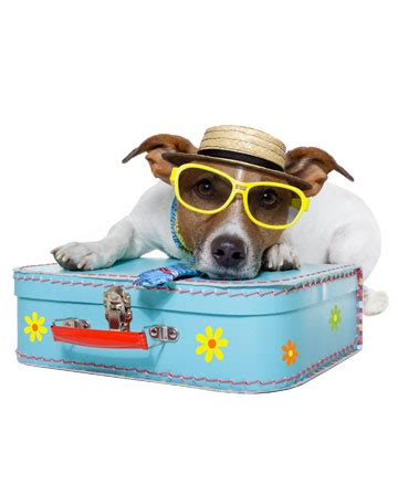 puppy shipping services sky global relocations pet shipping services