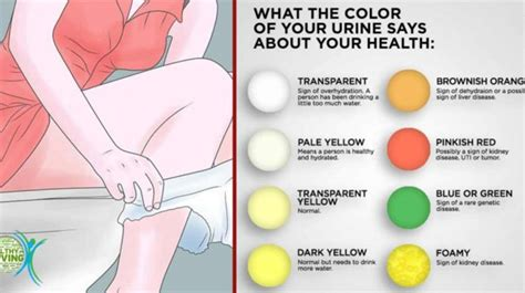 what color is your when your what does the color of your urine say about your health