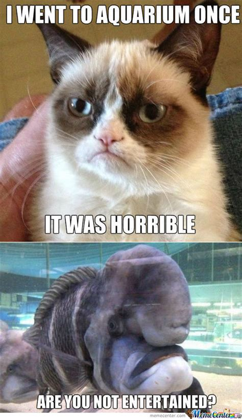 The Best Cat Memes - grumpy cat memes best collection of funny grumpy cat pictures