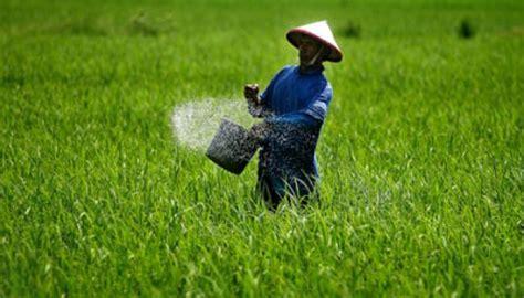 Beras Berkisar harga beras dipagaralam merangkak naik bisnis syariah