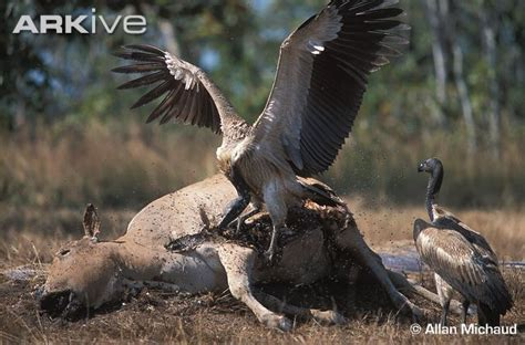 Ternak Cacing Gagal june 2012 besar burungnya