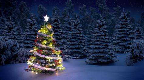 start christmas tree farm how to start a tree farm how to start an llc