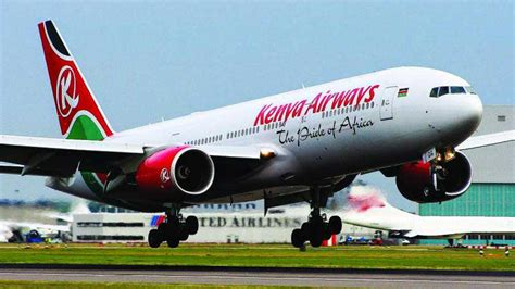 body  stowaway falls  kenya airways plane  lands