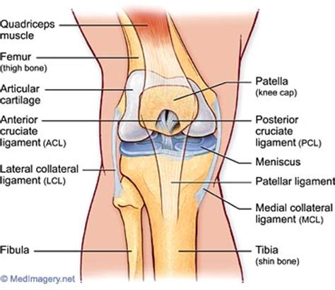 knee parts diagram knee knee diagnosis