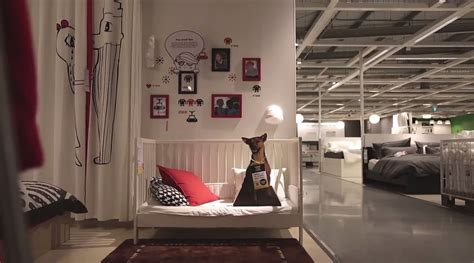 Stores Like Ikea Ikea Advertises Adoptable Dogs In Stores Because Every