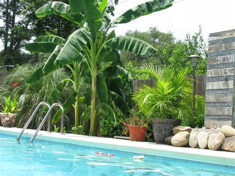 Tropical Backyards by A Tropical Backyard Pool Swimming Pools Bathtubs And
