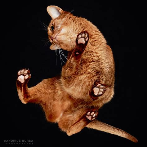 i gatti los gatos open table cats a photographer captures cats from underneath