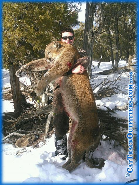 Records Colorado Cat Track Outfitters Guided Mountain In