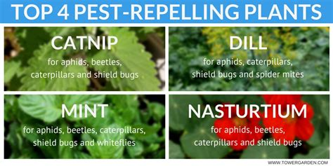 ultimate guide  garden pest control