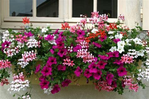 Fleurs Odorantes Pour Balcon by Choisir Une Plante Pour Jardini 232 Re Quelques Id 233 Es Et
