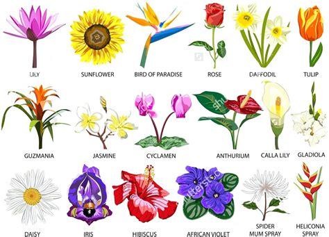 floral diagram of hibiscus diagram floral diagram of hibiscus flower