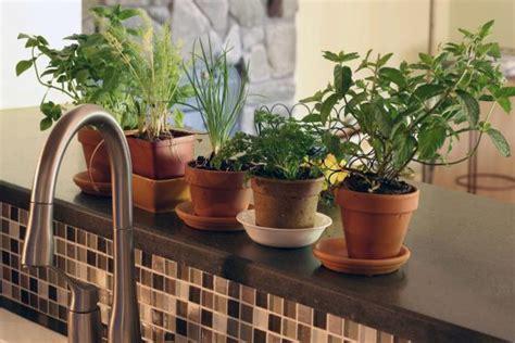 grow  indoor herb garden  tos diy
