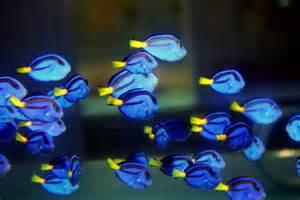 aquarium hobby at large   Reef Builders   The Reef and Marine Aquarium