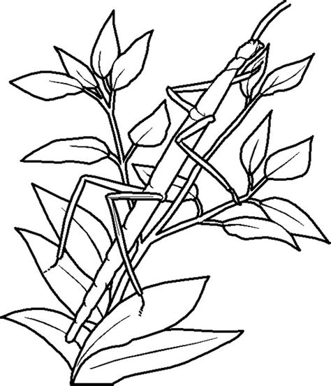 Camouflage Animals Coloring Pages