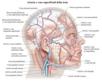 mal di testa continuo cause di mal di testa forte continuo frequente alle