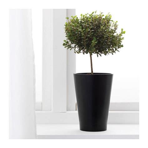 Pied Baignoire Bébé Ikea by Excellent Papaja Plant Pot Ikea Put Bamboo In These With