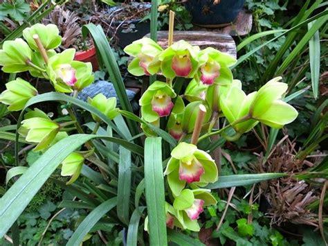 malattie orchidee in vaso le foglie delle orchidee orchidee come riconoscere i
