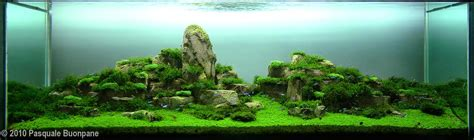Iwagumi Aquascape by Aquascape Exles Aquascapers