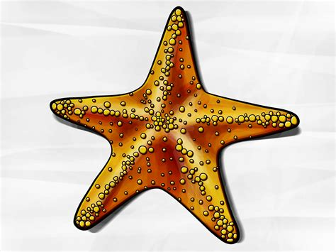 Maxi Sceva Syari how to draw a starfish 6 steps with pictures wikihow