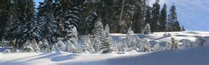 Photos Of Snow File Trees Covered By Snow In Boreal California Jpg