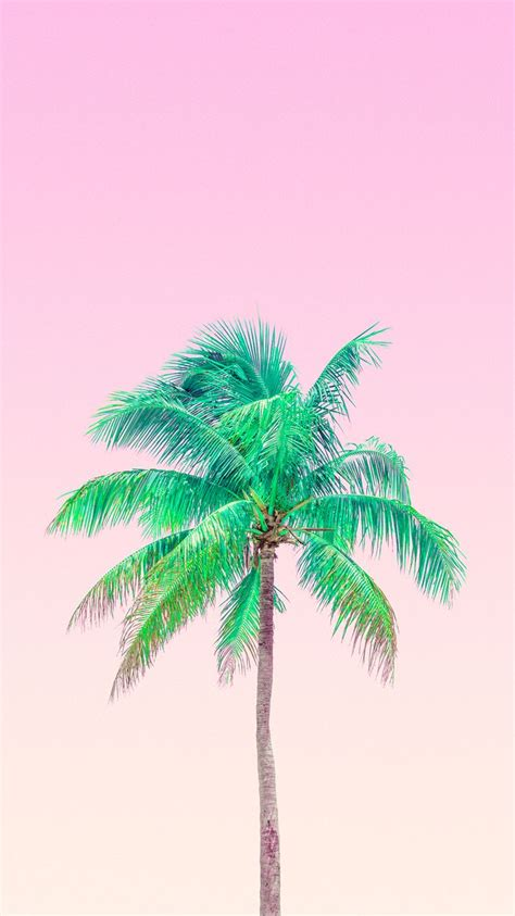 palm trees background 207 best palm trees images on backgrounds