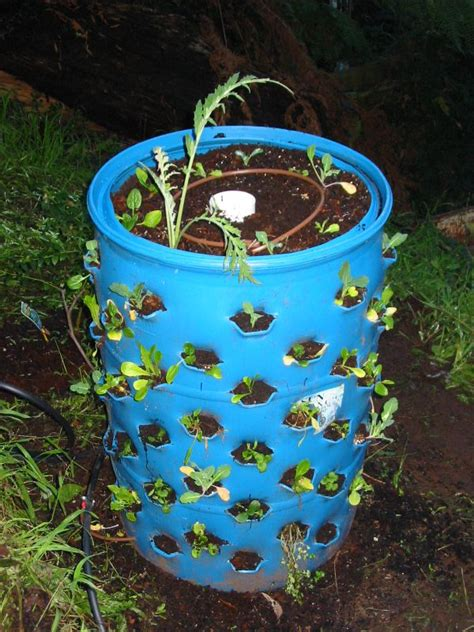 growing    plants    gallon drum eco snippets