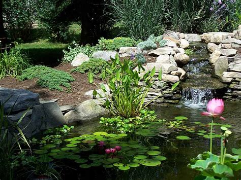 backyard pond with waterfall garden ponds water features water gardens