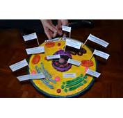 Plant Cell Project Play Doh 3  DecorBold