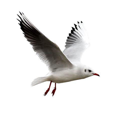 imagenes de aves sin fondo aves png 1 4 taringa