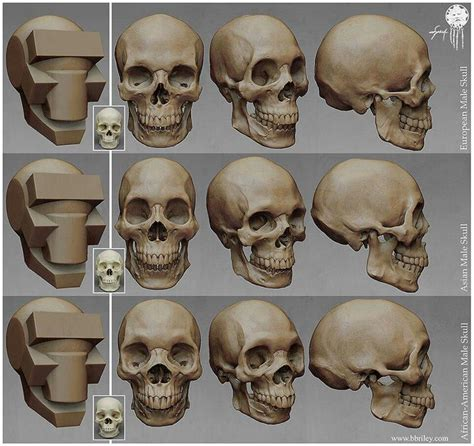 zbrush tutorial skull 42 best sculping images on pinterest character design