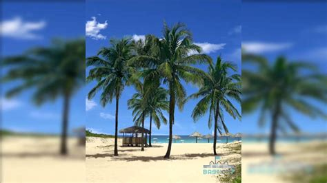 samsung note  beach palms   wallpaper youtube