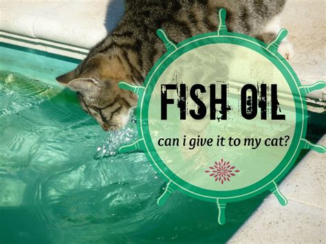 can i give my can i give my cat fish what you should fluffy