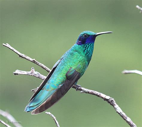 two weeks in south america produces hundreds of new birds