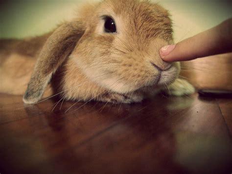 play   bunny rabbitslife diy ideas