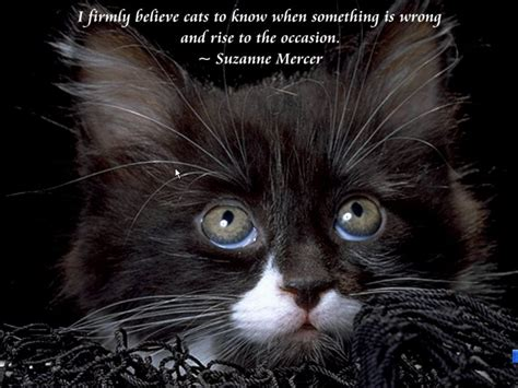 cat wallpaper with quotes cute kitten quotes wallpaper cats and scenic reflections