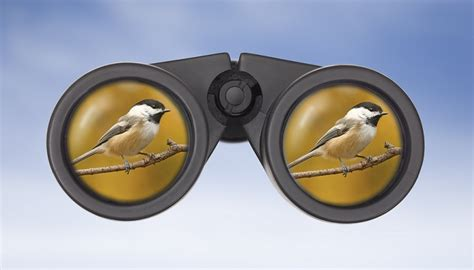 best bird binoculars the 5 best bird binoculars reviewed for 2018