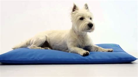 dog bed pads dog bed pads dog bed pad sofa pet detachable washable safety supplies puppy print