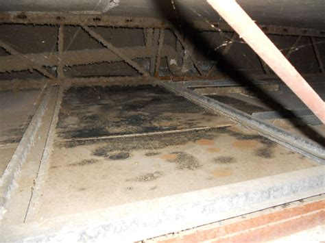 Removing Mold From Drywall Ceiling by Florida Mold Remediation