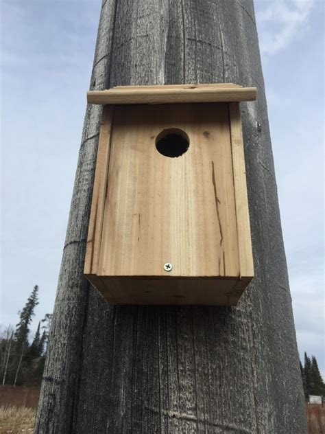 what direction should bluebird house face birdhouses crane lake nature blogcrane lake nature blog