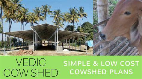 cattle shed design  shed planning kl gurukul