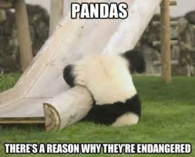 Funny Panda Memes - funny silly panda meme and lol