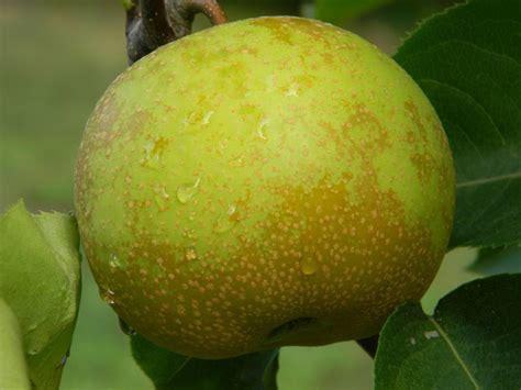 fruit tree care 106 best general information fruit trees and cider images