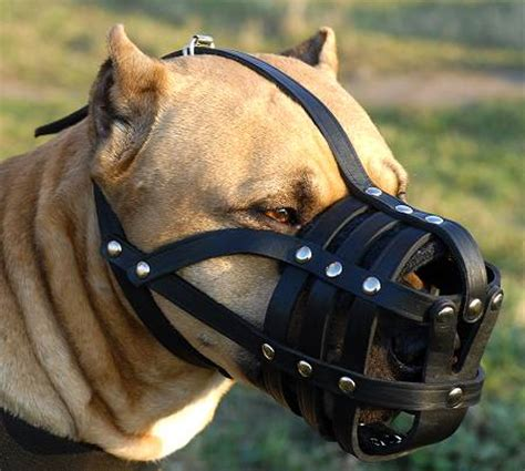 are acorns bad for dogs buy leather basket muzzle for safe walking and vet visits