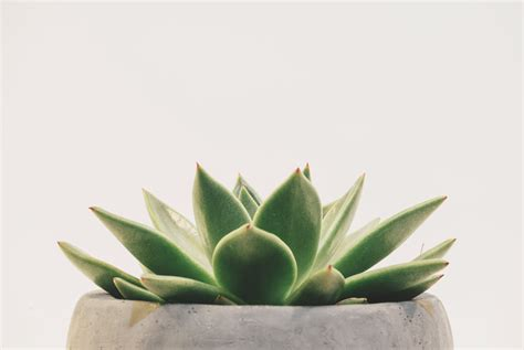 minimalist plants 500px 187 187 grab your audience with clean minimalist
