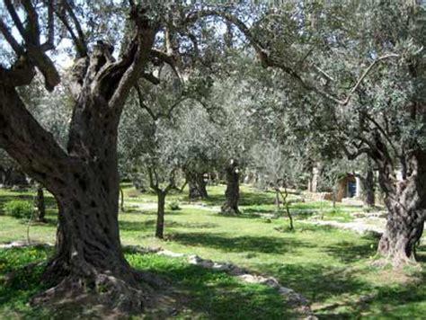 the last hours of jesus from gethsemane to golgotha books blue eyed ennis the garden of gethsemane