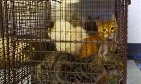 animal hoarding  collection  research  journalism