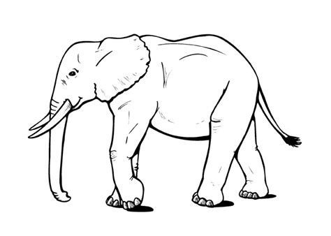 free coloring pages of elephant face